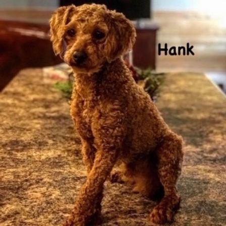 Hank.jpg