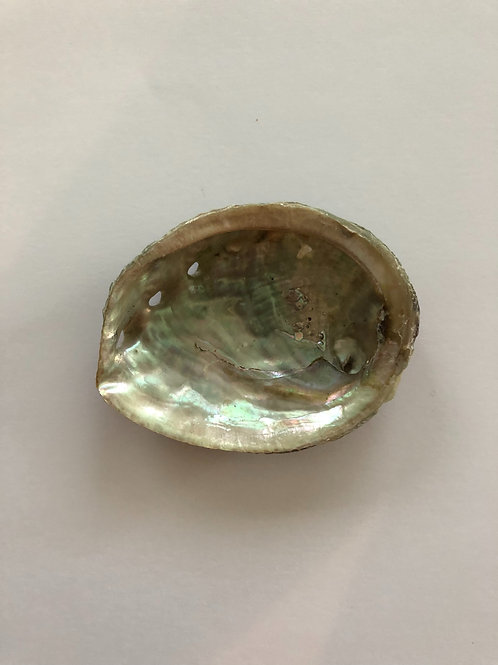 Albalone Shell (small)