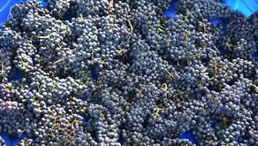 Descarado Wines is OPEN FOR BUSINESS!!!