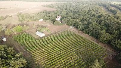 Vineyard 2019 arial.jpg
