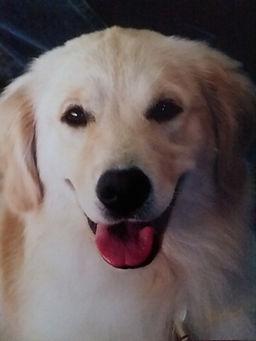 Bailey 1 year 2.jpg