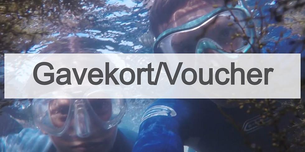Gavekort: Snorkling