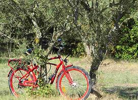 South Spirit Bike Avignon