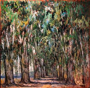 Les arbres à Fadia, Platane