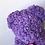 Thumbnail: Purple Rose Bear