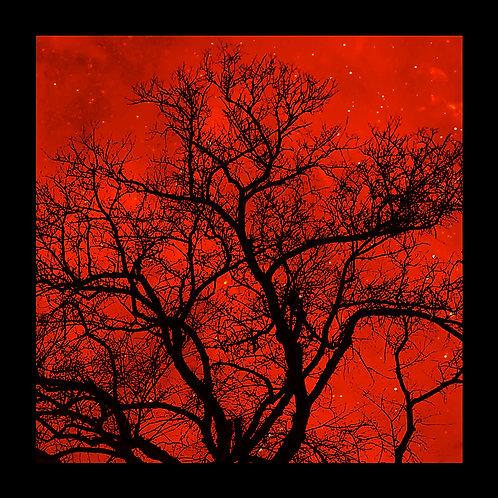 Red Night Sky