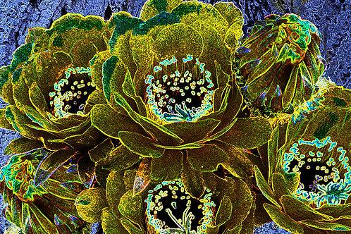 Variegated Cactus