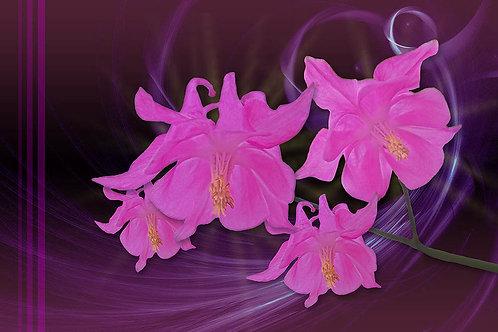 Whimsical Pinks