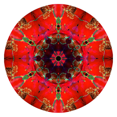 Mandala Bright Red Cactus