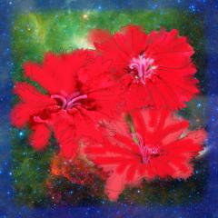 Red Splashes with Stars