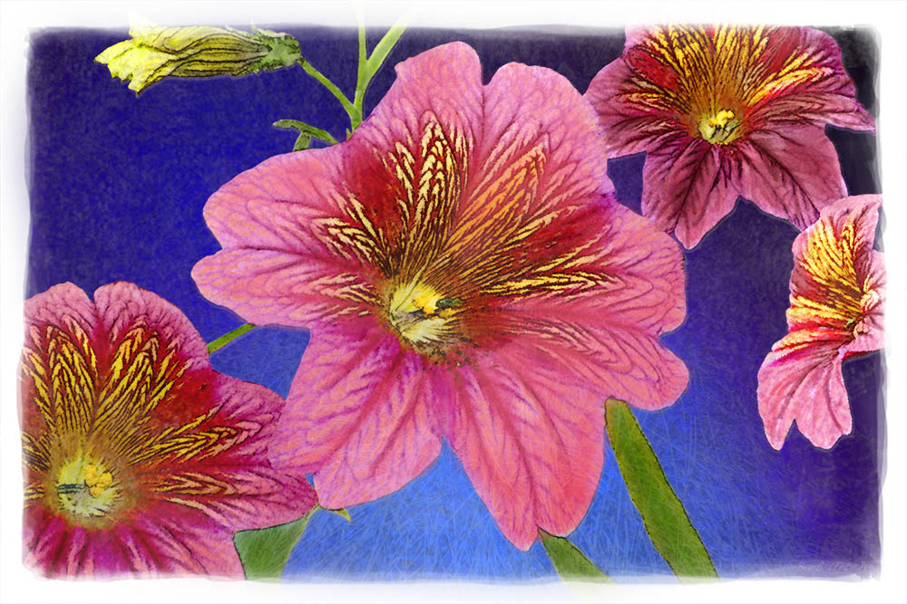 Cranberry & Navy Flowers Watercolor Web copy