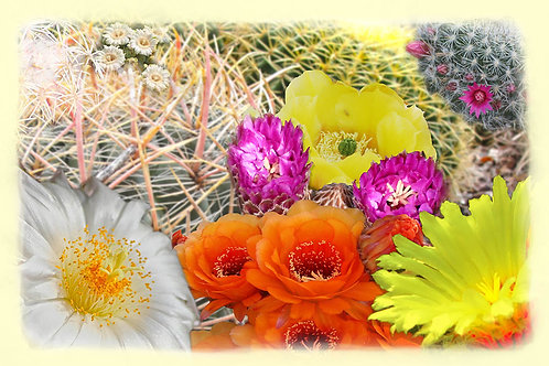 Cactus in the Spring