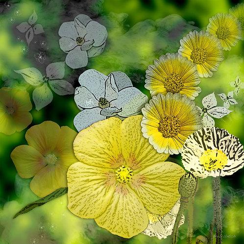Whites & Yellows