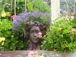 barb flower head