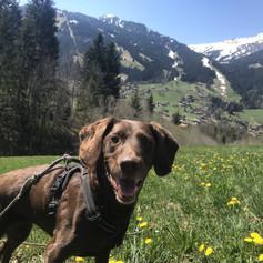 Rosie in the field