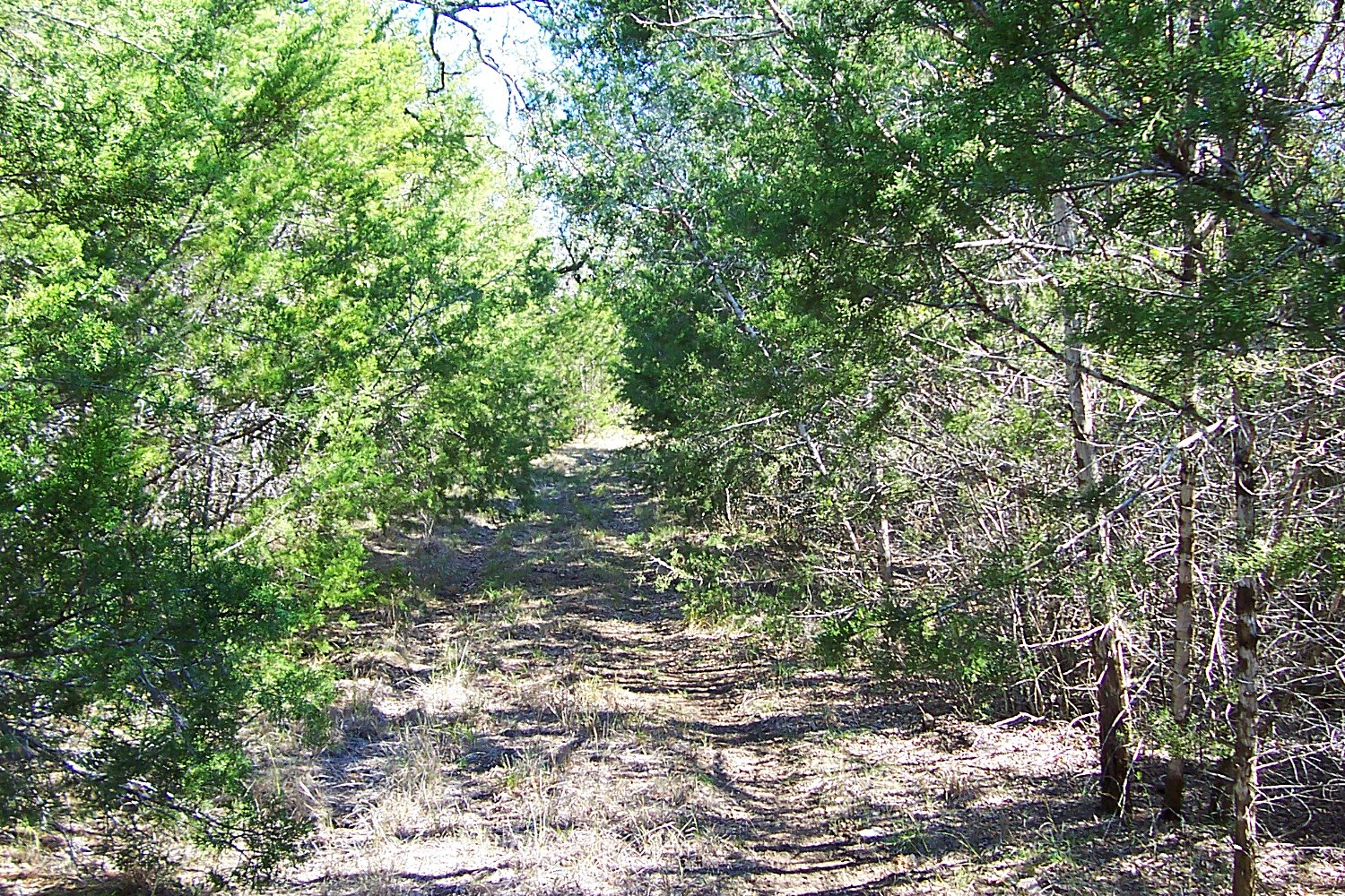 A path through the trees