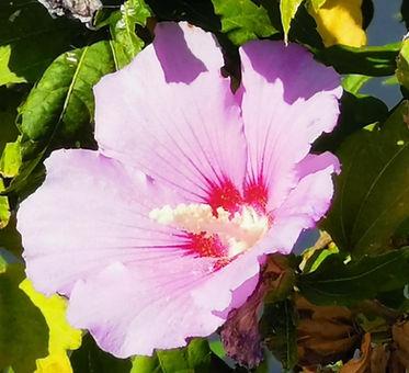 paarse tropische bloem-min_edited.jpg