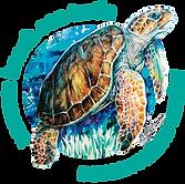 navarre turtle.png