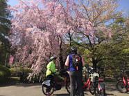 桜の下でちょっと休憩