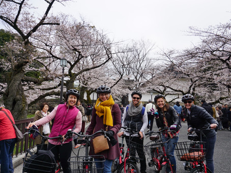 Book our Cherry Blossoms Private Sakura Tour🌸