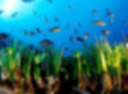cala santanyi diving mallorca