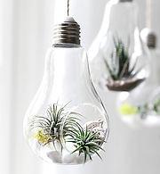Cool Indoor Plants