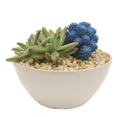 Blue Desert Gem Garden