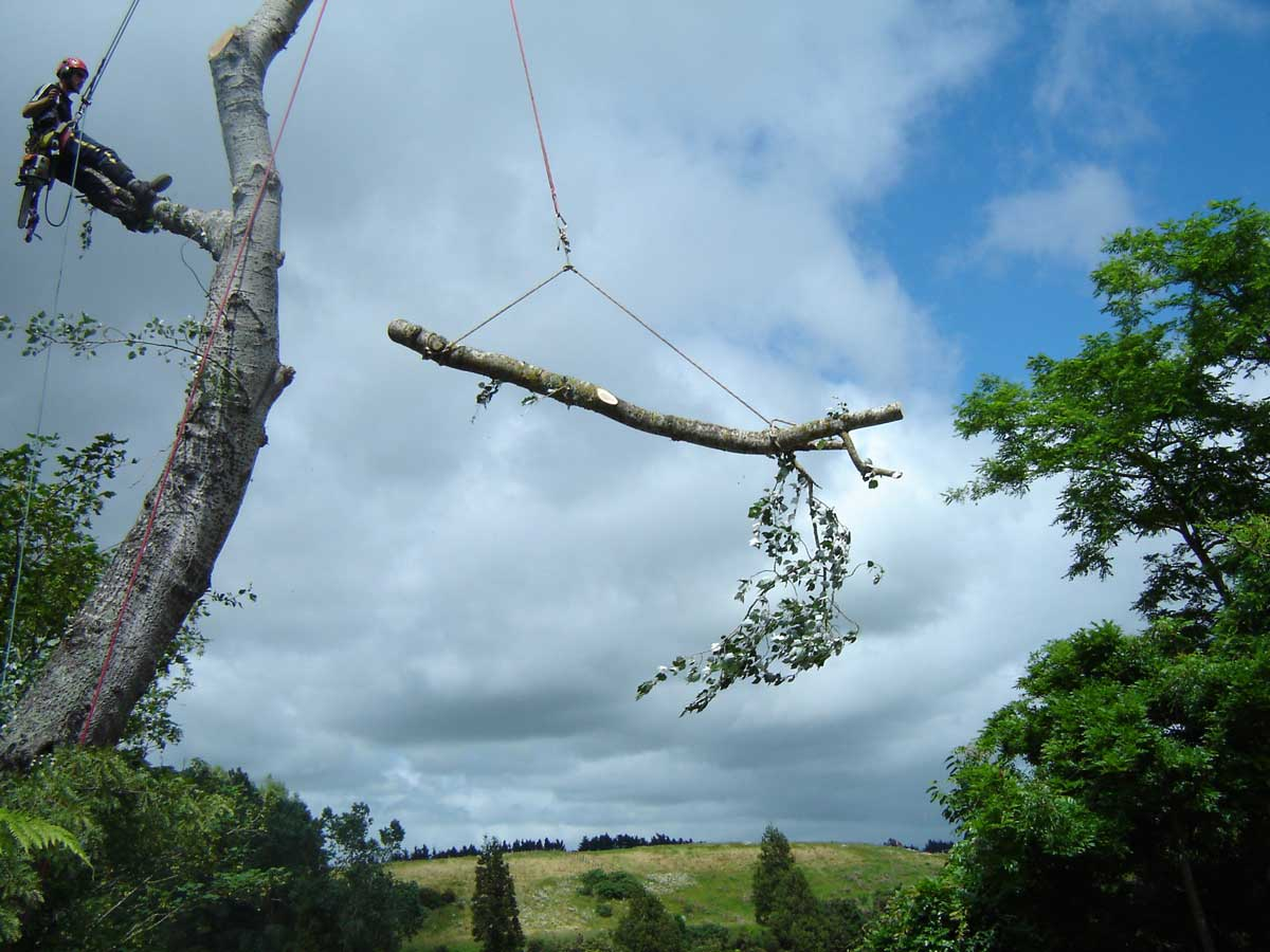 Rigging a branch