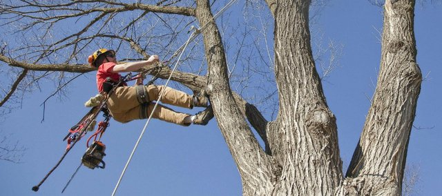 Rope Climbing an Oak Tree