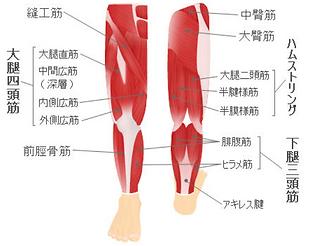 膝改善.png