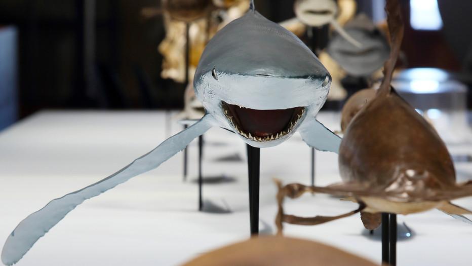 Requins, L'Exposition Sensation