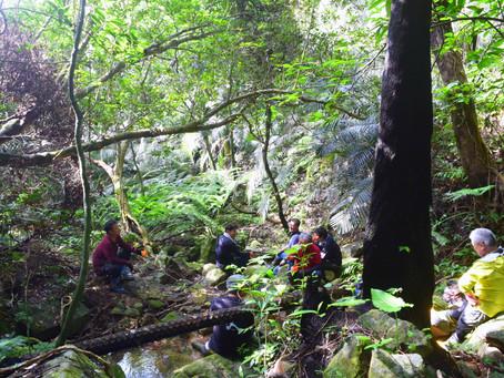 2月27日。亜熱帯の森林浴