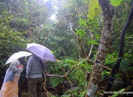 12月5日。森の湿感と香りのアロマ