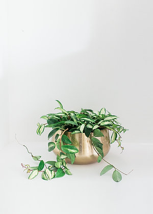 BRASS ETCHED PLANTER AND HOYA
