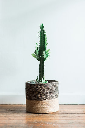 BASKET PLANTER + EUPHORBIA