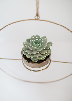 HANGING HOOP AND POTTED PLANT - small