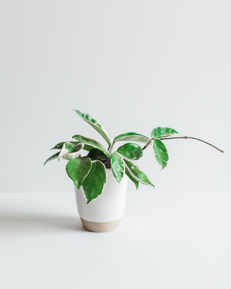 CERAMIC TUMBLER + PLANT
