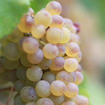 IMG_8610_winemaking.jpg