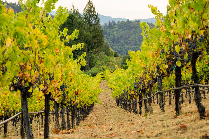 Vineyard_MtVeeder_Fall 1.jpg