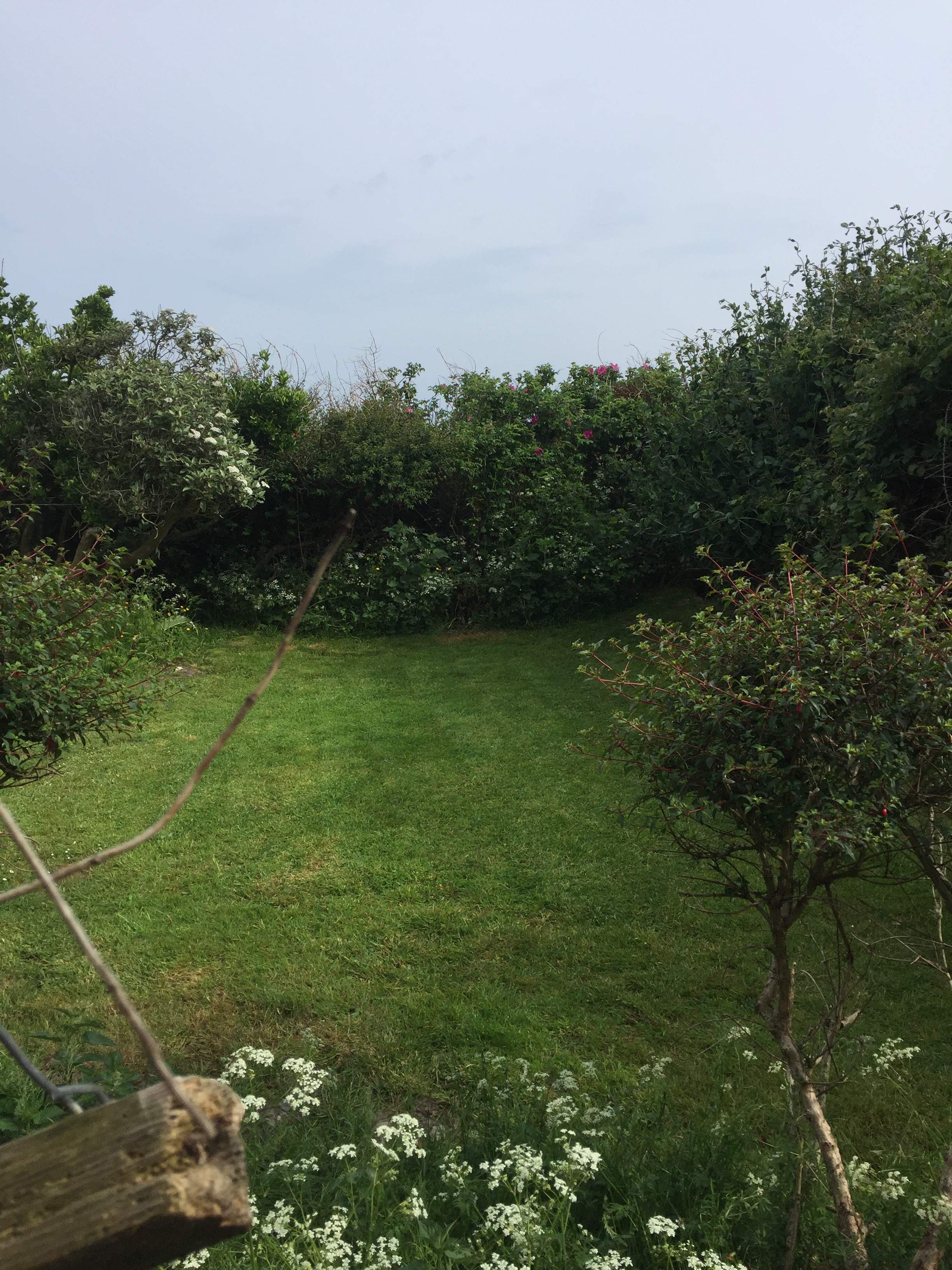 Gardd cefn | Back garden