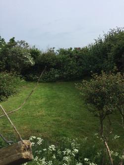Gardd cefn   Back garden