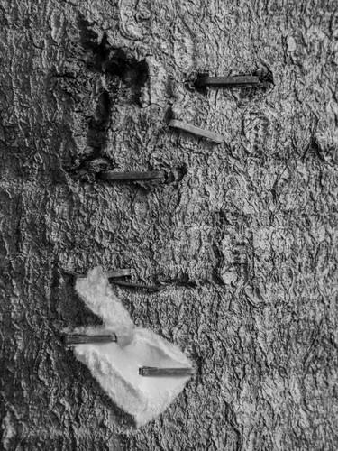 City Tree 3