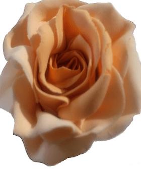 rose-compressor.png