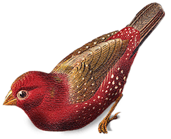 bird2-compressor.png