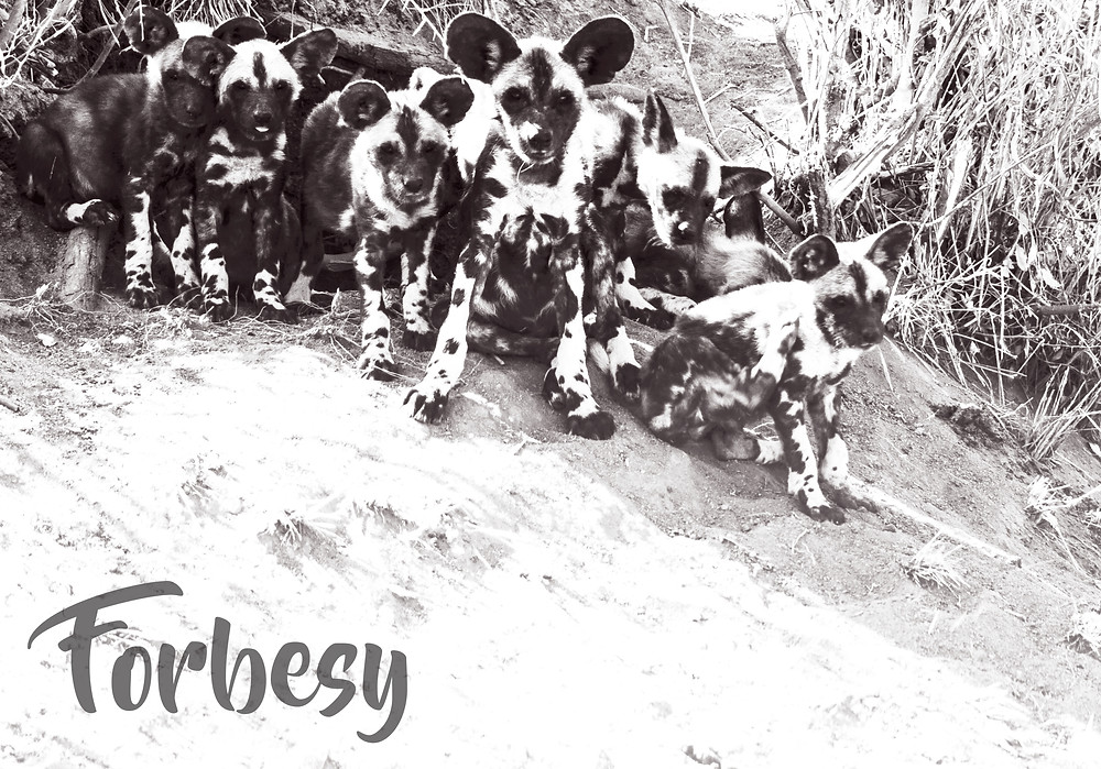 forbesy black and white collection