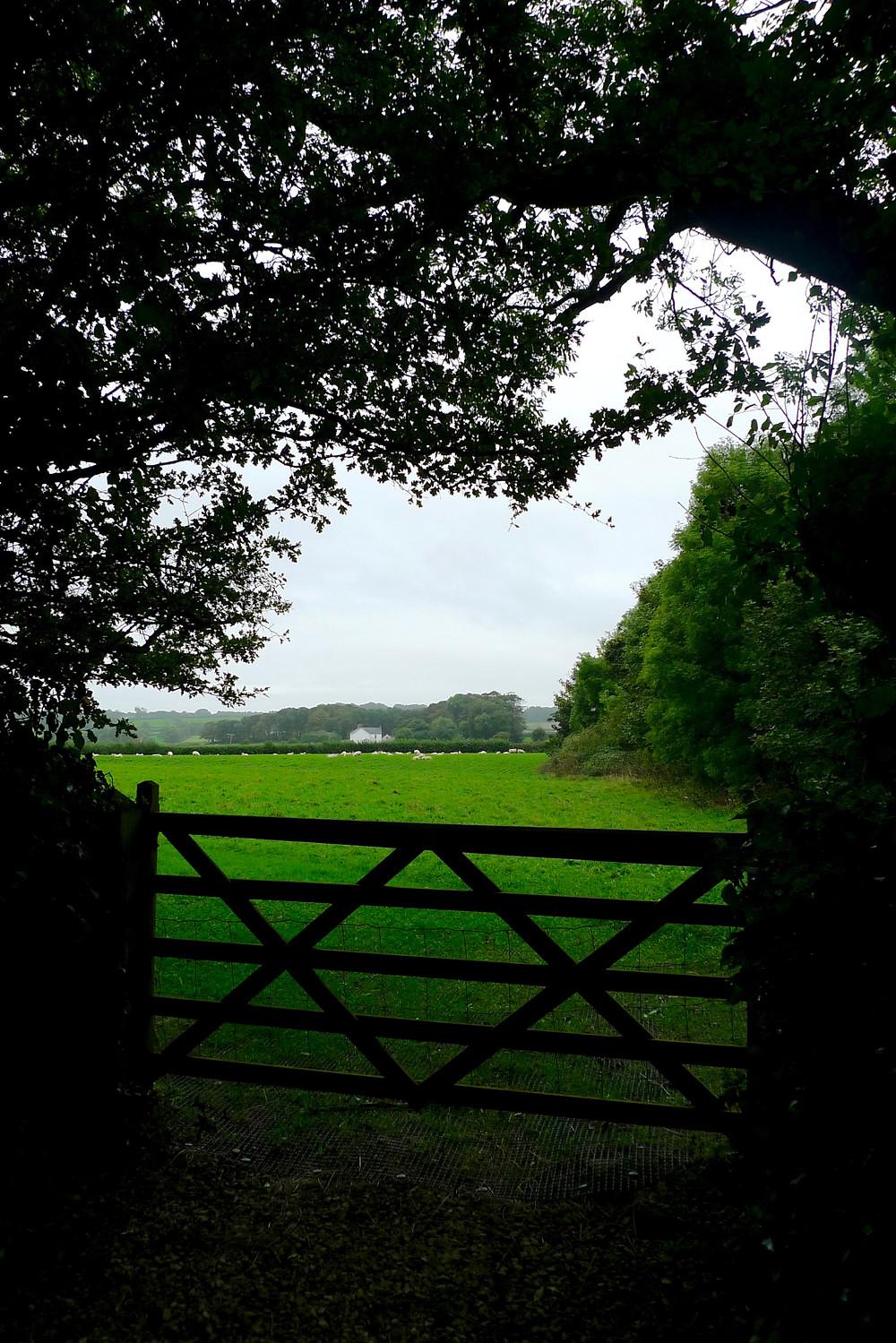 Glyndwr 4