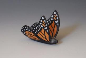 Buffalo Horn Butterfly