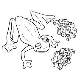 small frog.PNG