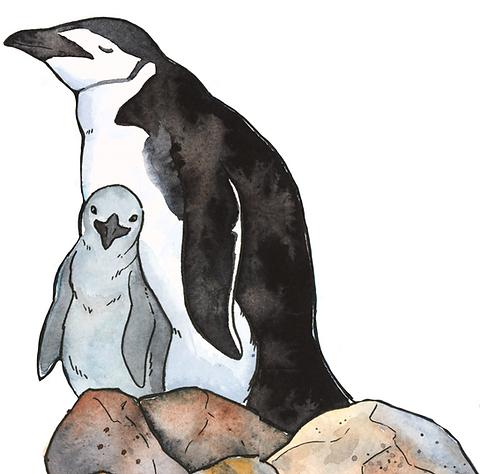 penguin spot.png