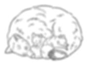bear small.PNG